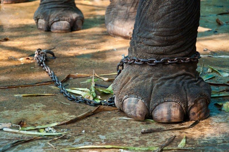 elefanteenc