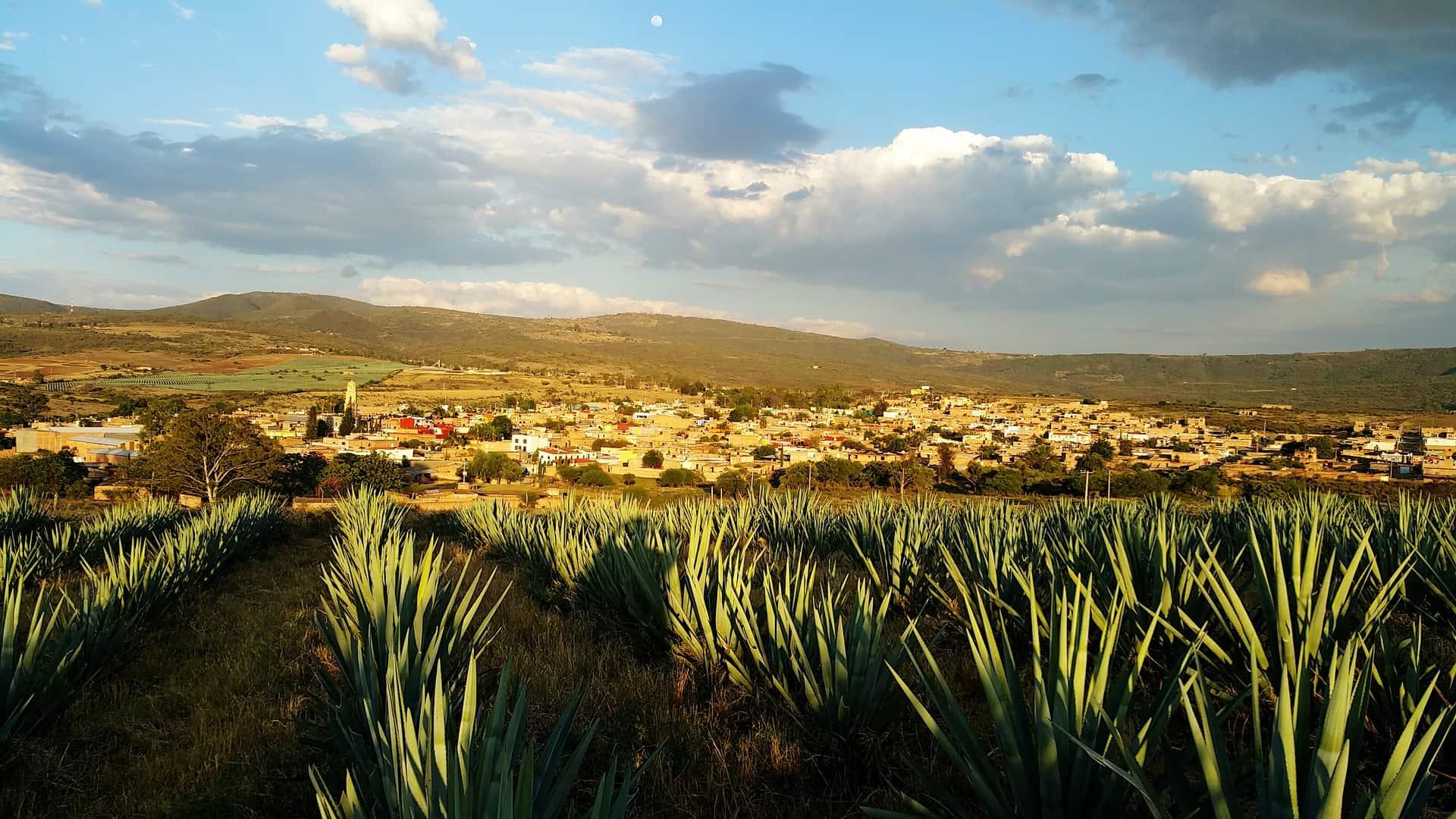 qué hacer en tequila jalisco 1