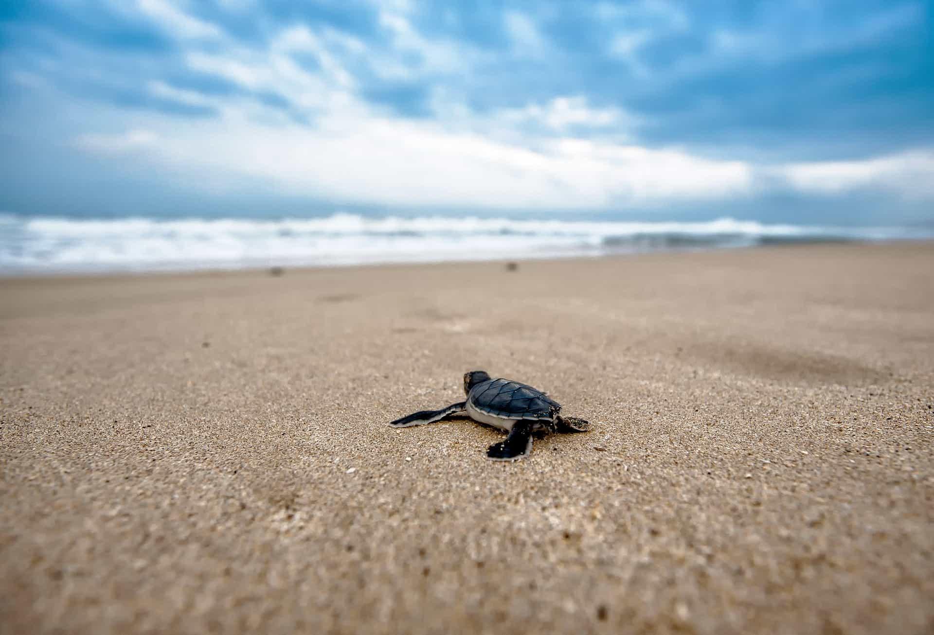 ruta por las mejores playas de oaxaca 13