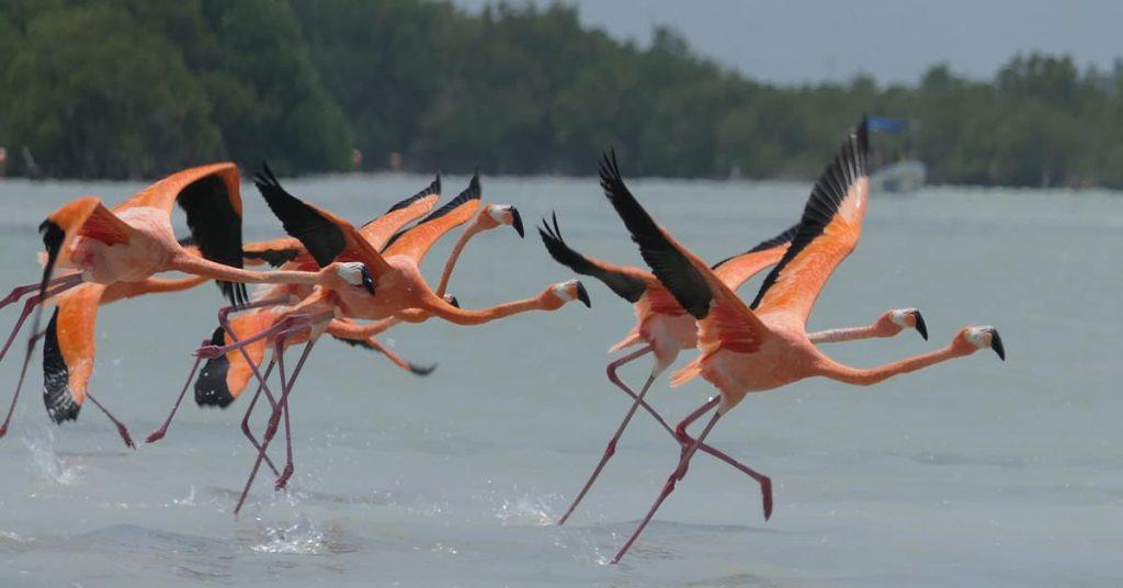 itinerario por la peninsula de yucatan 7 (1)
