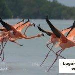 25 lugares para visitar en Yucatán [Cenotes, playas y más]
